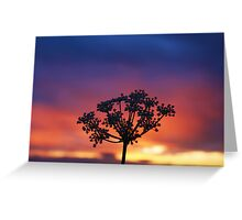 Wildflower Night Greeting Card