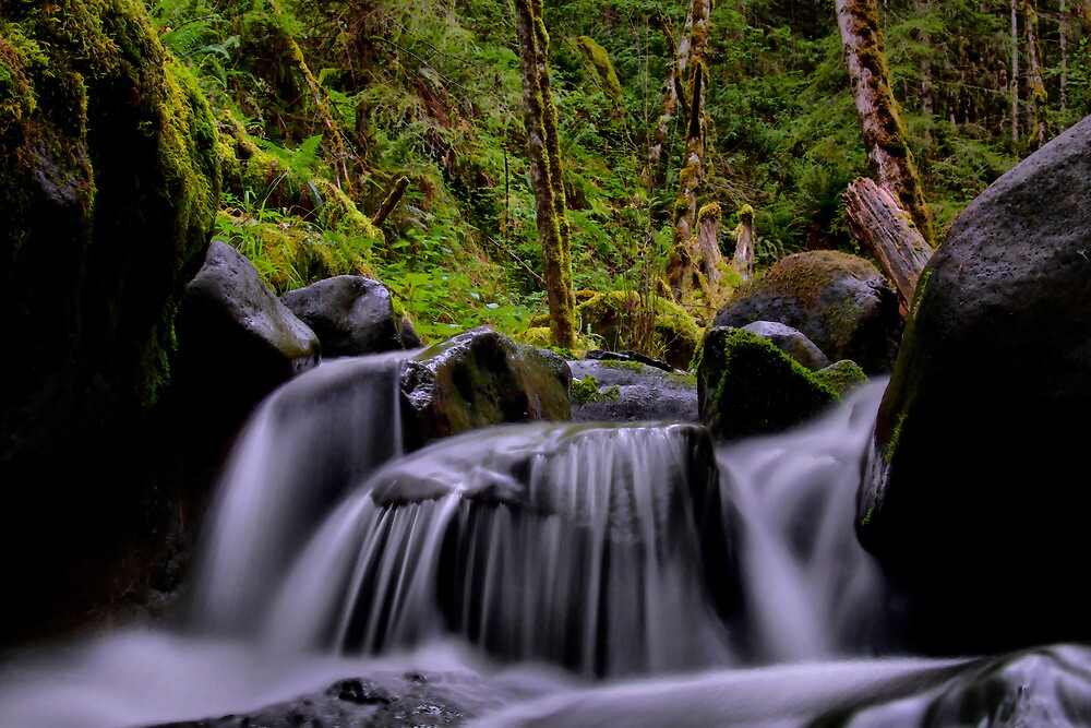 Heading Home ~ Upper Canyon Creek ~ by Charles & Patricia   Harkins ~ Picture Oregon