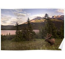 Wildlife in Canada Poster