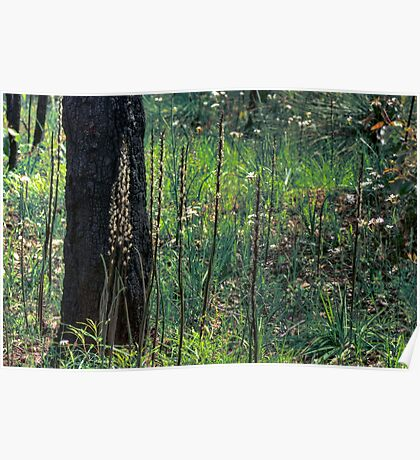 Patch of wild flowers in the forest Poster