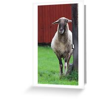 My father was a cameroon sheep Greeting Card