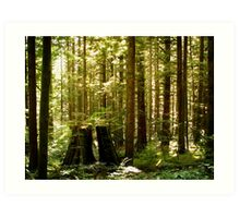 Golden Ears Provincial Park Art Print