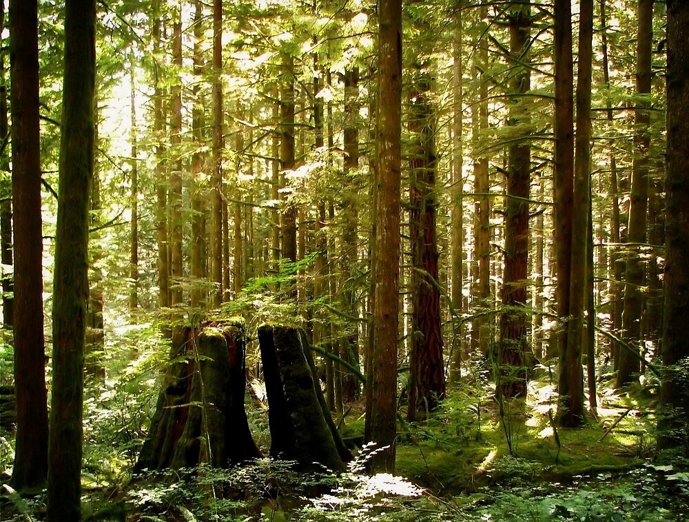 Golden Ears Provincial Park by Tracy Friesen