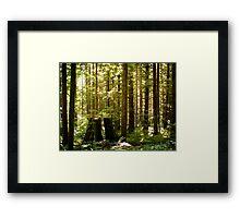 Golden Ears Provincial Park Framed Print