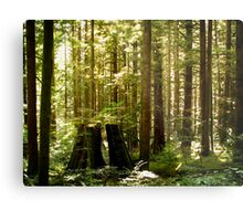 Golden Ears Provincial Park Metal Print