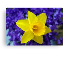 Easter Daffodil Canvas Print