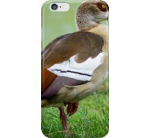Egyptian Goose iPhone Case/Skin