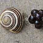 Blackberry Snail by ApeArt