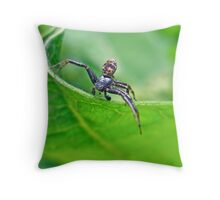 Xysticus Crab Spider - Male Throw Pillow