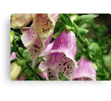 Foxgloves in the rain. Canvas Print