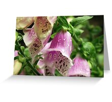 Foxgloves in the rain. Greeting Card
