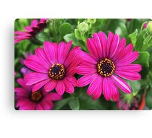 Twin Pink Daisies Canvas Print