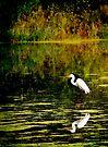 Autumn Reflections by KBritt