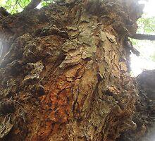 Trunk of a tree III - Down by the Riverside by Bernhard Matejka