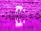 Caribou Reflection in the Pink by Barberelli