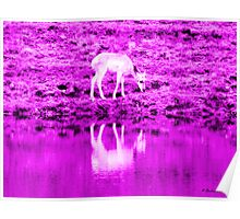 Caribou Reflection in the Pink Poster