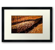 Autumn Forest Scene - Fall Time - Tree Log with Fungi & Mushrooms in Sunlight Framed Print