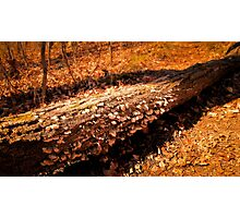Autumn Forest Scene - Fall Time - Tree Log with Fungi & Mushrooms in Sunlight Photographic Print