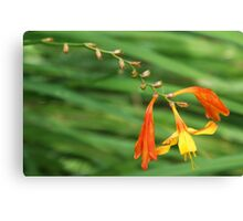 Orange and Yellow Perenial Canvas Print