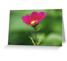 Red Flower Bokeh Greeting Card