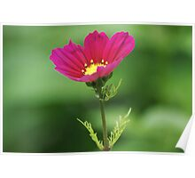 Red Flower Bokeh Poster