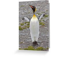 Cooeee you Tourists!  Look at Me!  I'm a Flasher! ;o) Greeting Card