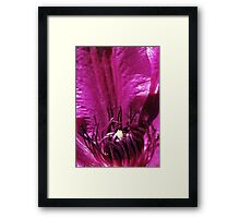Clematis Crown Framed Print