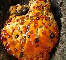 Mushroom Cake by Amrita Neelakantan
