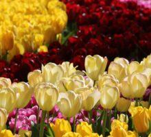 Keukenhof Gardens Tulips Sticker