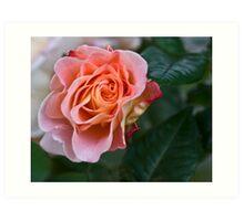 Peach blooming Art Print