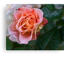 Peach blooming Canvas Print