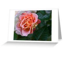 Peach blooming Greeting Card