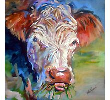 Mary the Cow Photographic Print