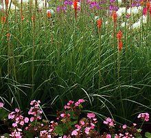 Red Poker Garden Flower Bed by David Alexander Elder