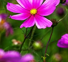 Allotment flower by moor2sea