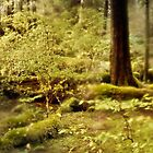 Rain draped forest by Owed to Nature