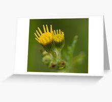 Yellow Buds Greeting Card