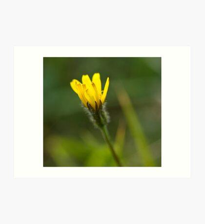 Yellow Bloom Art Print