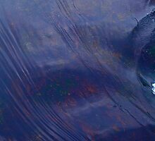 7 ★★★★★. After flood tide - Lofoten  . (NORWAY) .  by Brown Sugar . Views (330) Thank you ! by © Andrzej Goszcz,M.D. Ph.D