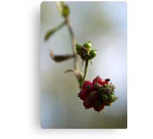 Very Berry Canvas Print