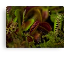 Toothy Plants Canvas Print
