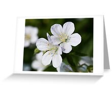 Silky White Flowers Greeting Card
