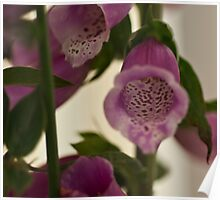 Spotted Pink Flowers Poster