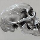 Skull Study by Brent Schreiber
