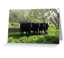 Cows-  standing in unison in the pasture Greeting Card