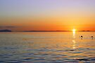 Swan Sunset by David Alexander Elder