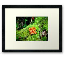 Glossy Mushrooms Framed Print