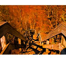 Old Wooden Staircase ~ Trees with Orange Leaves in a Mystical Forest ~ Fall Autumn Scenery Photographic Print