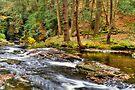 Autumn Stream by Yelena Rozov