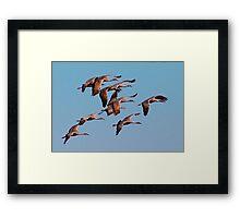 010210 Sandhill Cranes Framed Print